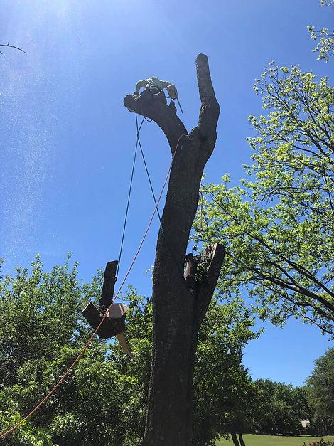 tree service Round Rock TX