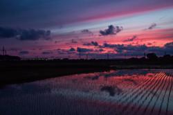夕暮れの田園