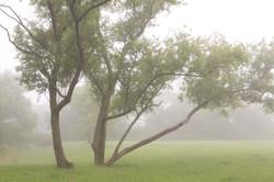 霧の朝/利兵池公園