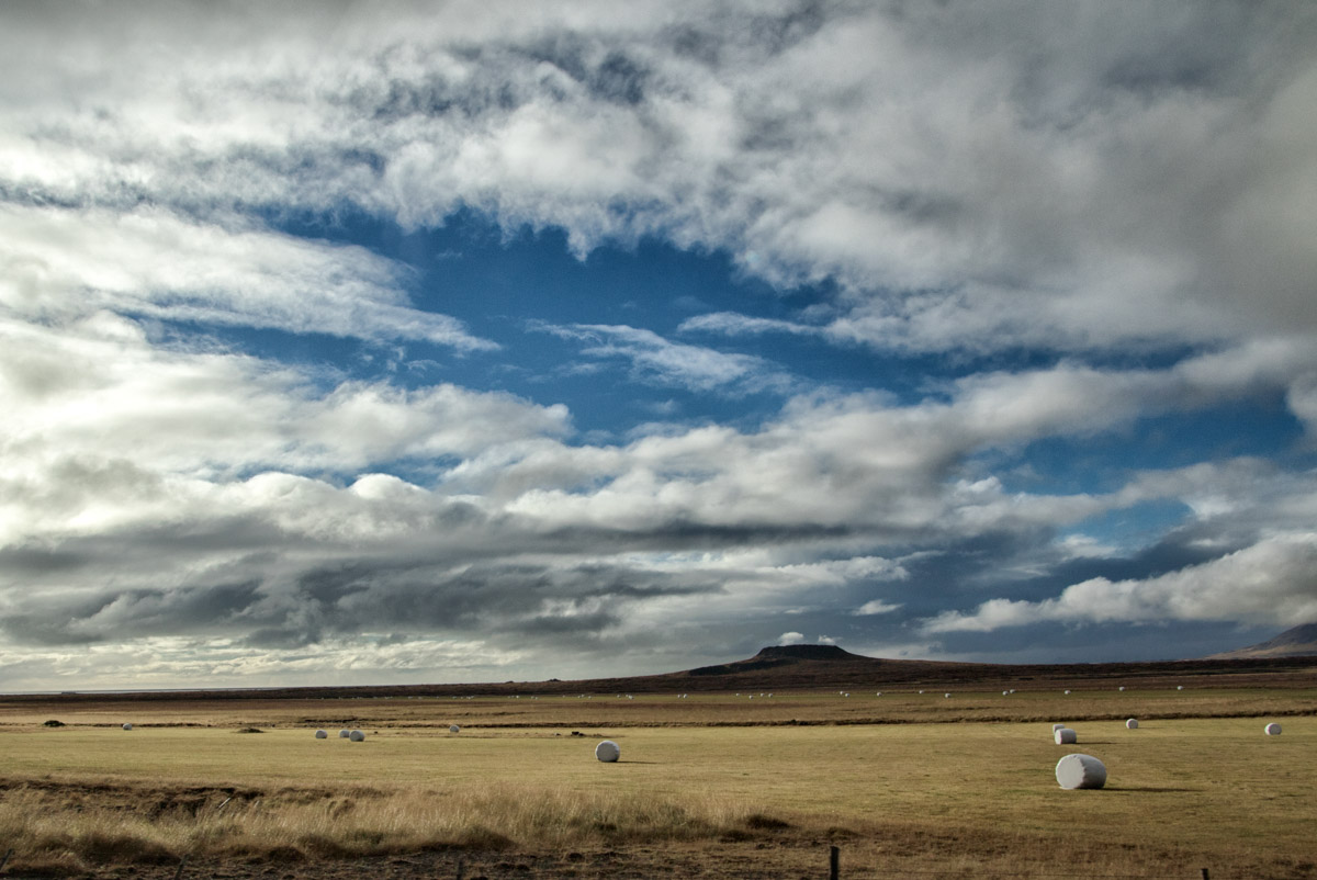 牧草ロールのある風景
