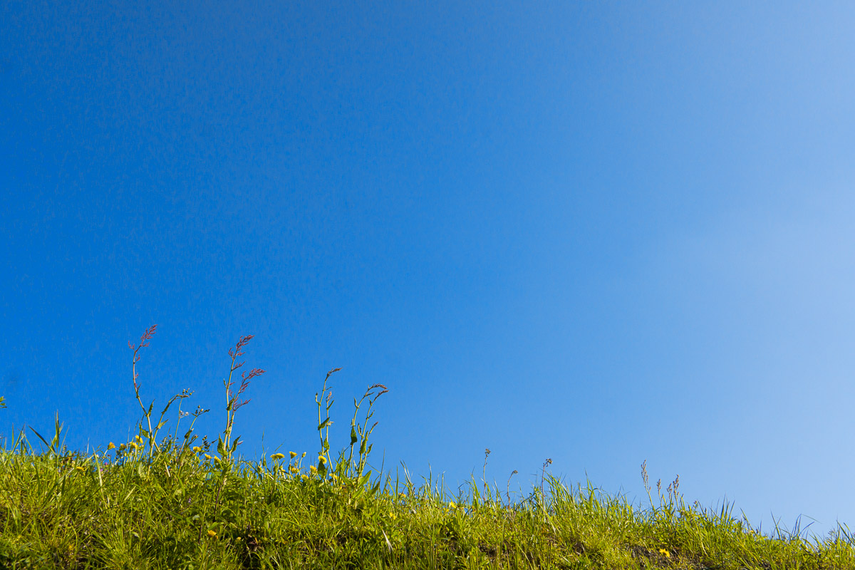 葦毛湿原・春