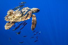 Turtle Oasis All over 1.jpg