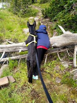 extra large solid black german shepherd puppy from Texas, wolfgang haus german s