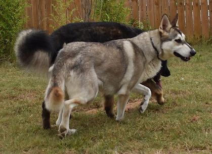 wolf mask german shepherd, hobo mask ger