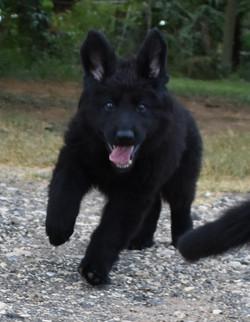 mazikeen solid black long coat german sh