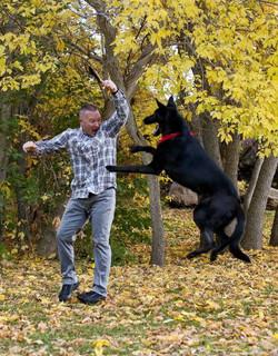 solid black large german shepherd (2)