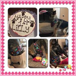 sable german shepherd 1 year birthday