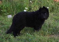 solid black long coat long hair german s