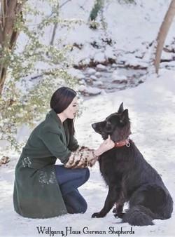 solid black long coat german shepherd wo