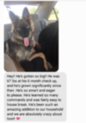 wolfgang haus german shepherd reviews te