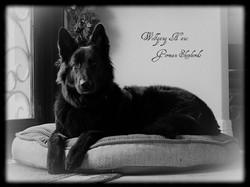 wolfgang haus solid black long coat germ