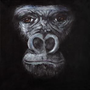 [EDIT] gorilla2.jpg