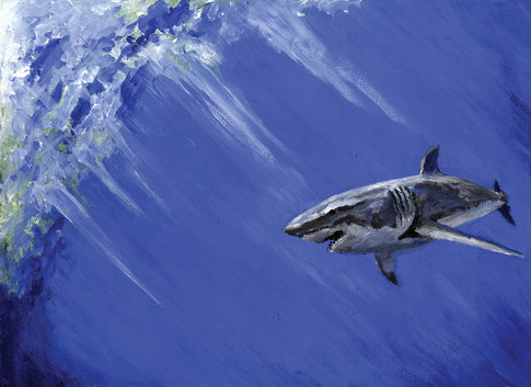 Shark - FINAL CMYK web.jpg