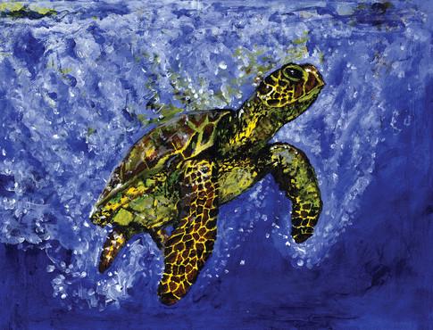 Turtle - FINAL CMYK web.jpg