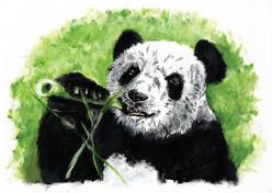 Panda - FINAL CMYK web.jpg