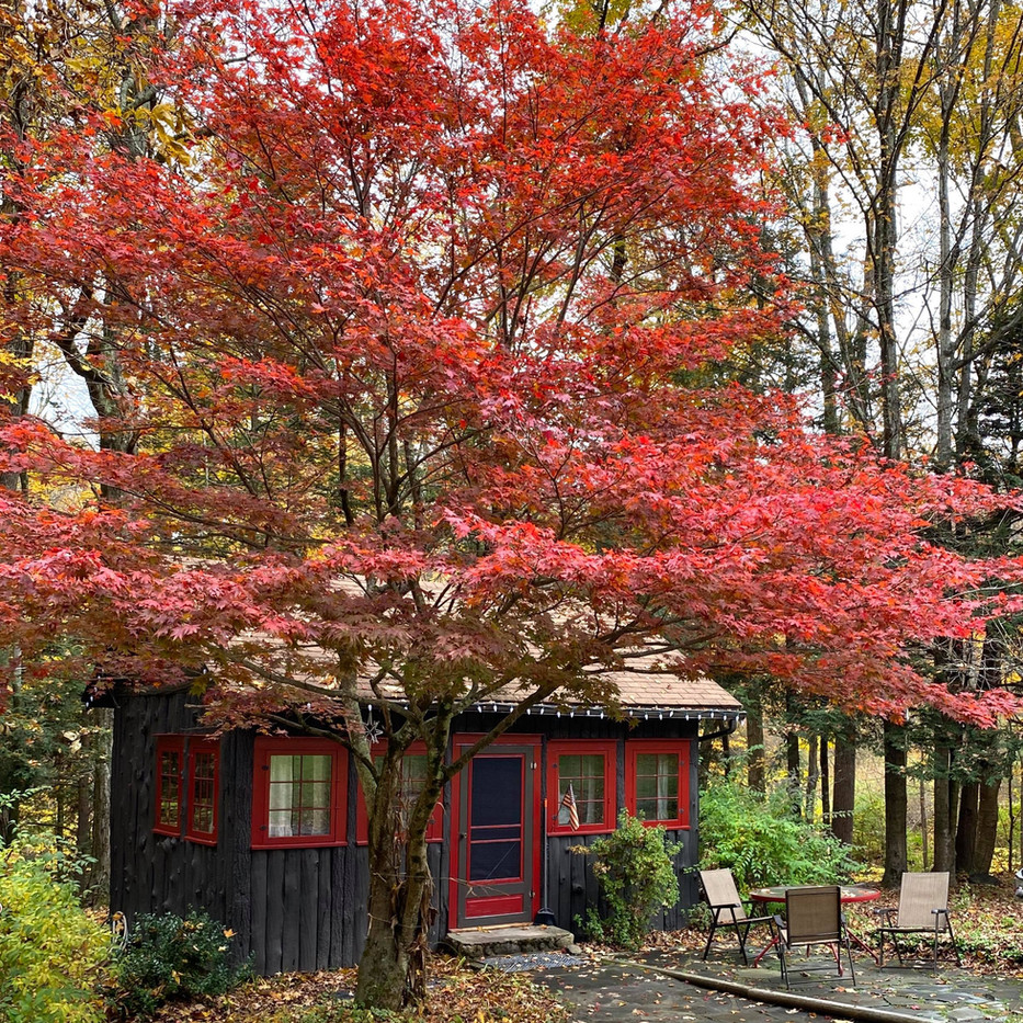 The beautiful red maple provides shade and beauty over the stone patio.