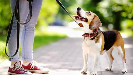 leashed dog.jpg