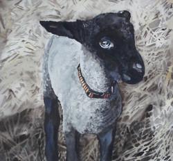 May, The Spring Lamb