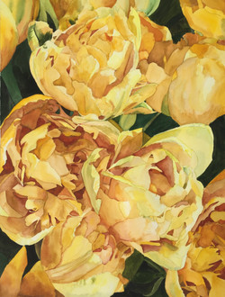 Yellow Parrot Tulips