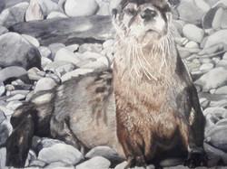 Otter's Outlook
