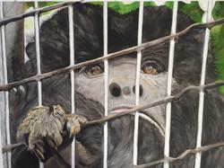 In Captivity
