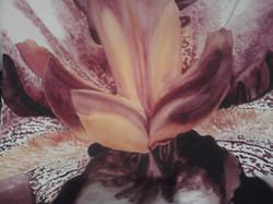 Iris Nucelus