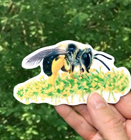 Mining Bee on Willow Sticker
