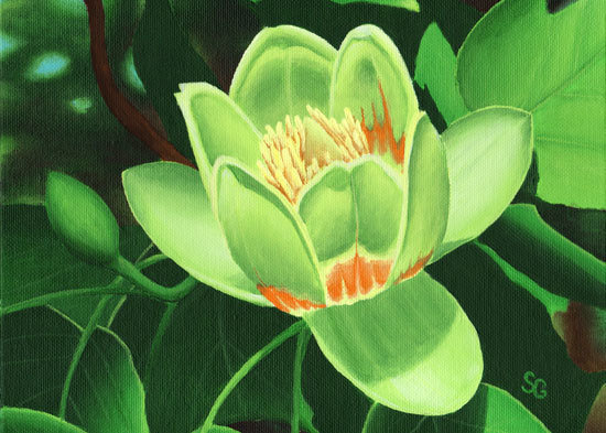 "Tulip Tree Blossom 1  8""x10"" Print"