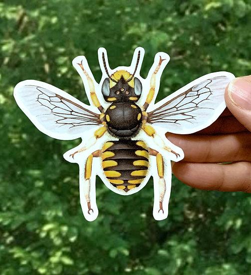 Wool Carder Bee (Female) Sticker