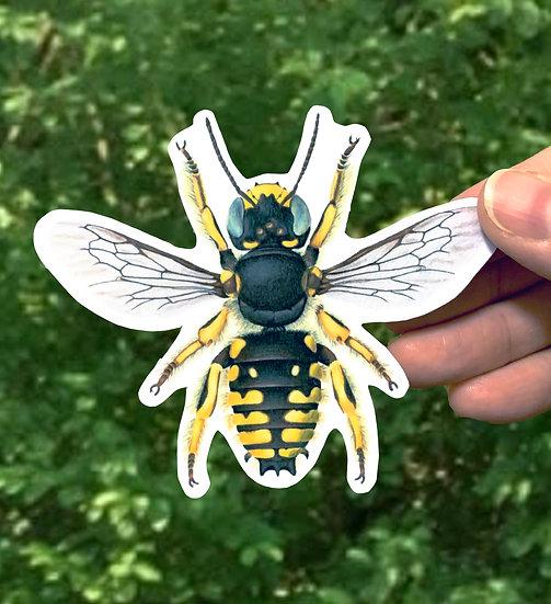 Wool Carder Bee (Male) Sticker