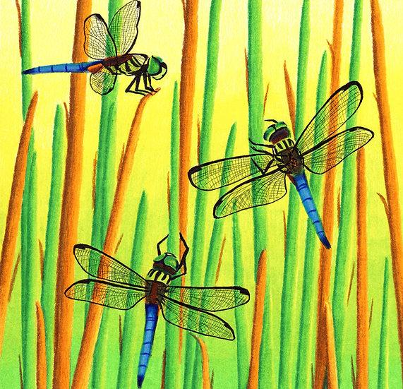 "Dragonflies 8""x10"" Print"