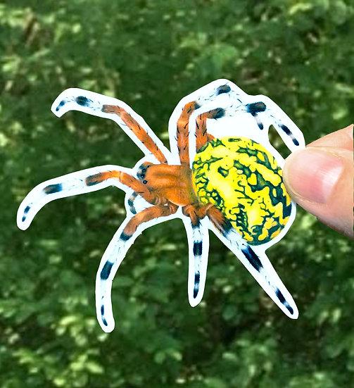 Pumpkin Spider Sticker, Marbled Orb Weaver Decal, Garden Spider, Araneus