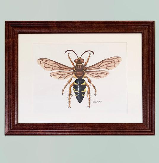 Eastern Cicada Killer Original Colored Pencil Drawing (Framed)