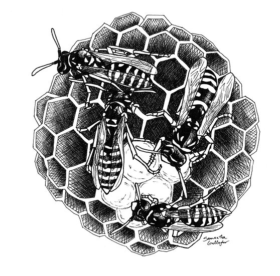 """Paper Wasps and Nest 8""""x10"""" Print"""