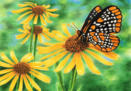 "Baltimore Checkerspot 8""x10"" Print"