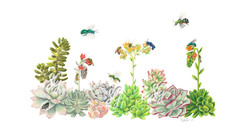 Succulents and Bees