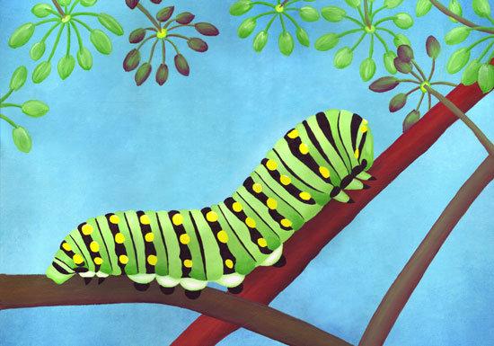 "Swallowtail Caterpillar 8""x10"" Print"