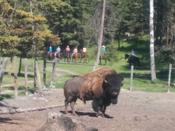 Ranch Trail Ride by Tom Tom