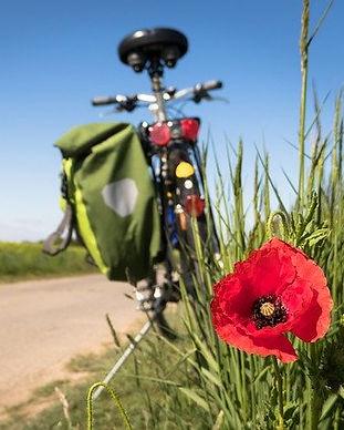 cycling-5178398_640.jpg