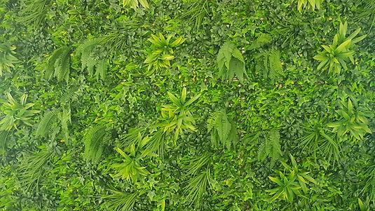 immagine sfondo verde studio.jpeg