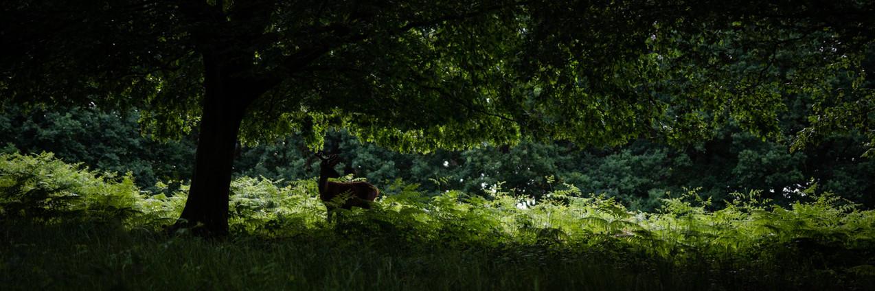 2019_Wildlife_Deer_1x3_London_008.jpg