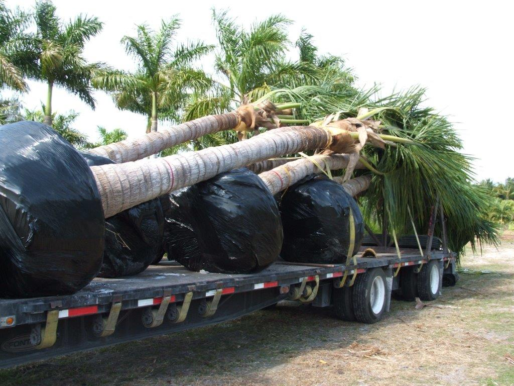 Trees Loaded 006.jpg