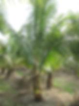 Coco small.JPG