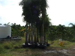 Palm Source General pics 018.jpg