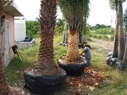 Palm Source General pics 016.jpg
