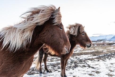 Island Süden Winter-73.jpg