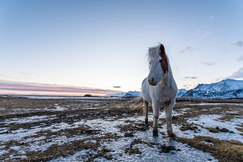 Island Süden Winter-68.jpg