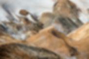 JRF-Island019.jpg