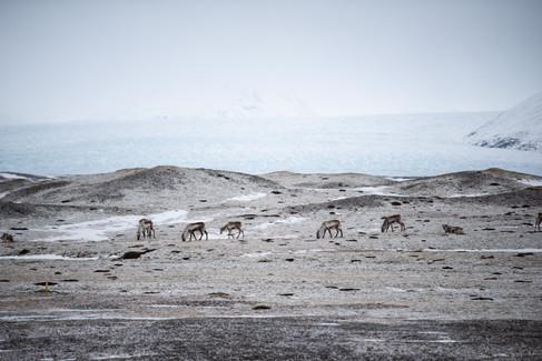 Island Süden Winter-84.jpg