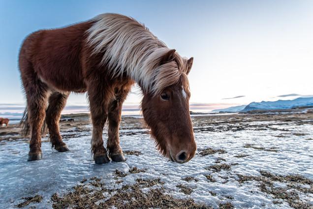 Island Süden Winter-72.jpg